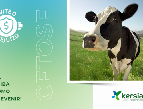 Perda de peso e diminuição na produção leiteira? Atente para Cetose!