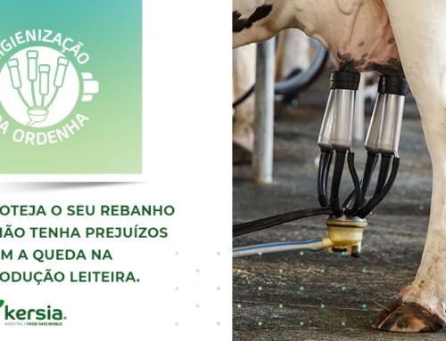Pré-dipping: qual impacto no gado leiteiro?