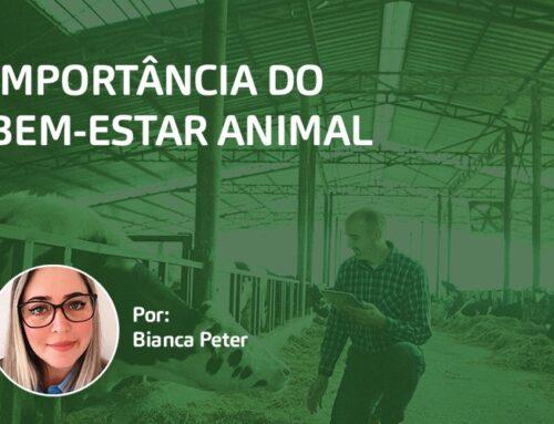 Importância do Bem-Estar Animal