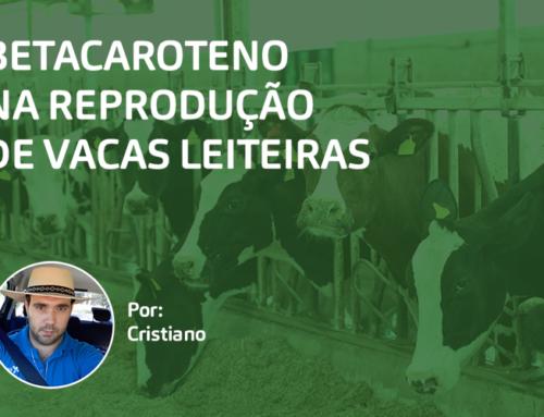 Betacaroteno na Reprodução de Vacas Leiteiras